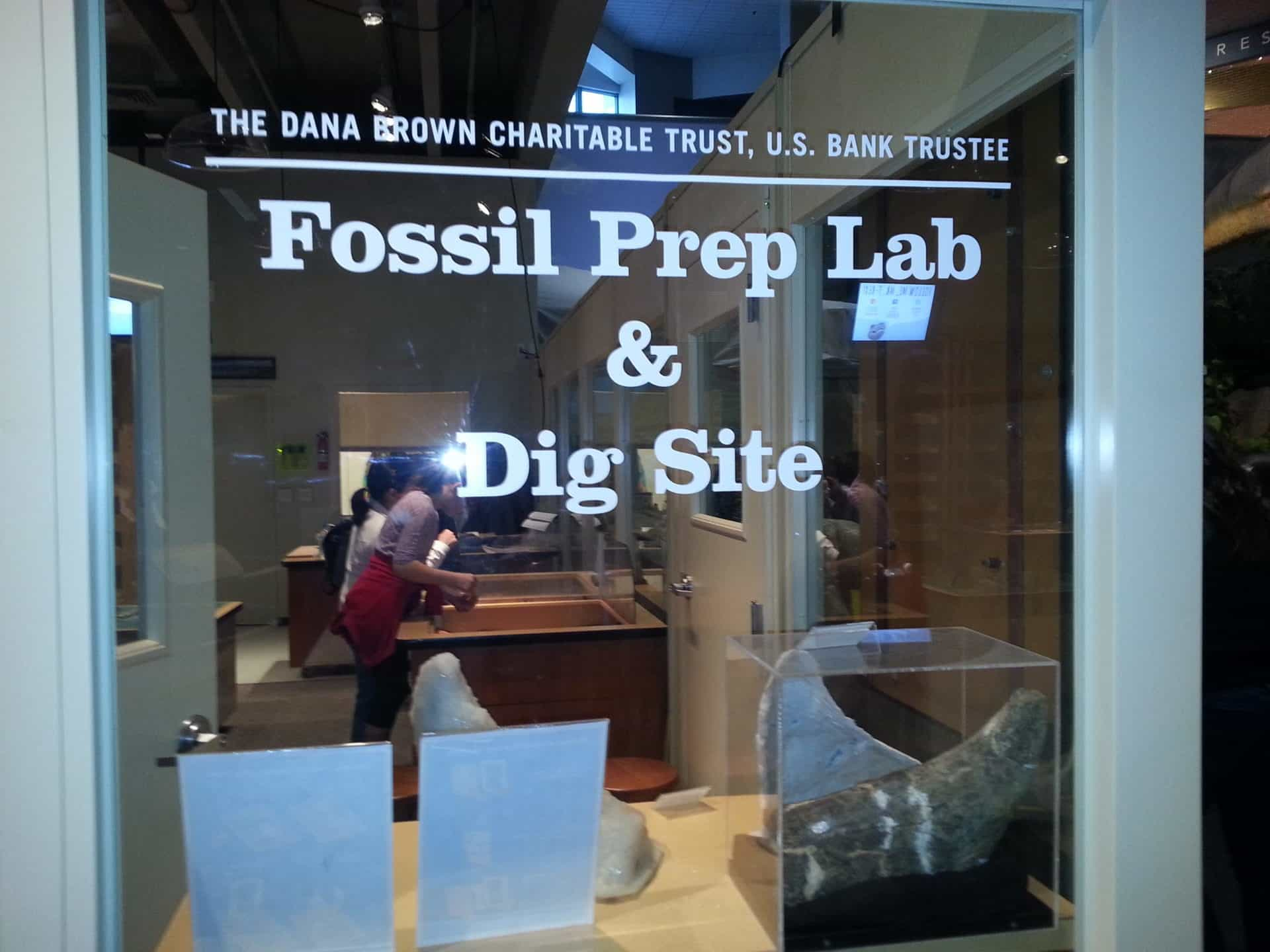 St Louis Science Center - Fossil Prep Lab