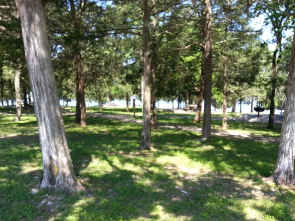 Shutes Branch Recreation Area landscape with mature trees