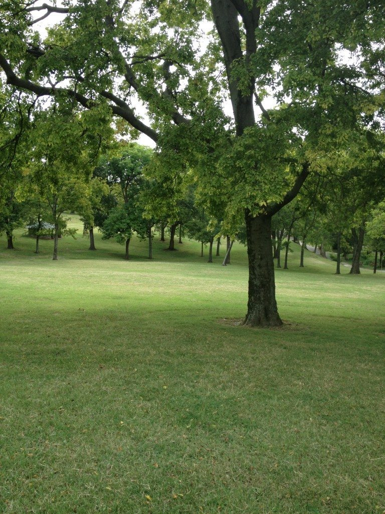 Reservoir Park Nashville - Grassy Hills to Play!