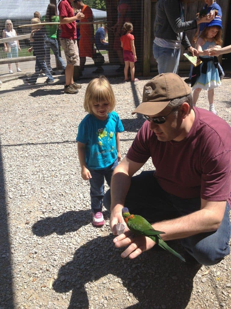 A father and daughter Looking at a Parrot at Kentucky Down Under