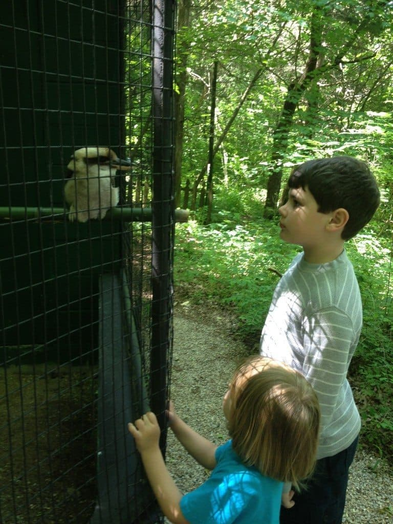 A boy and girl looking at a kookaburra in a cage
