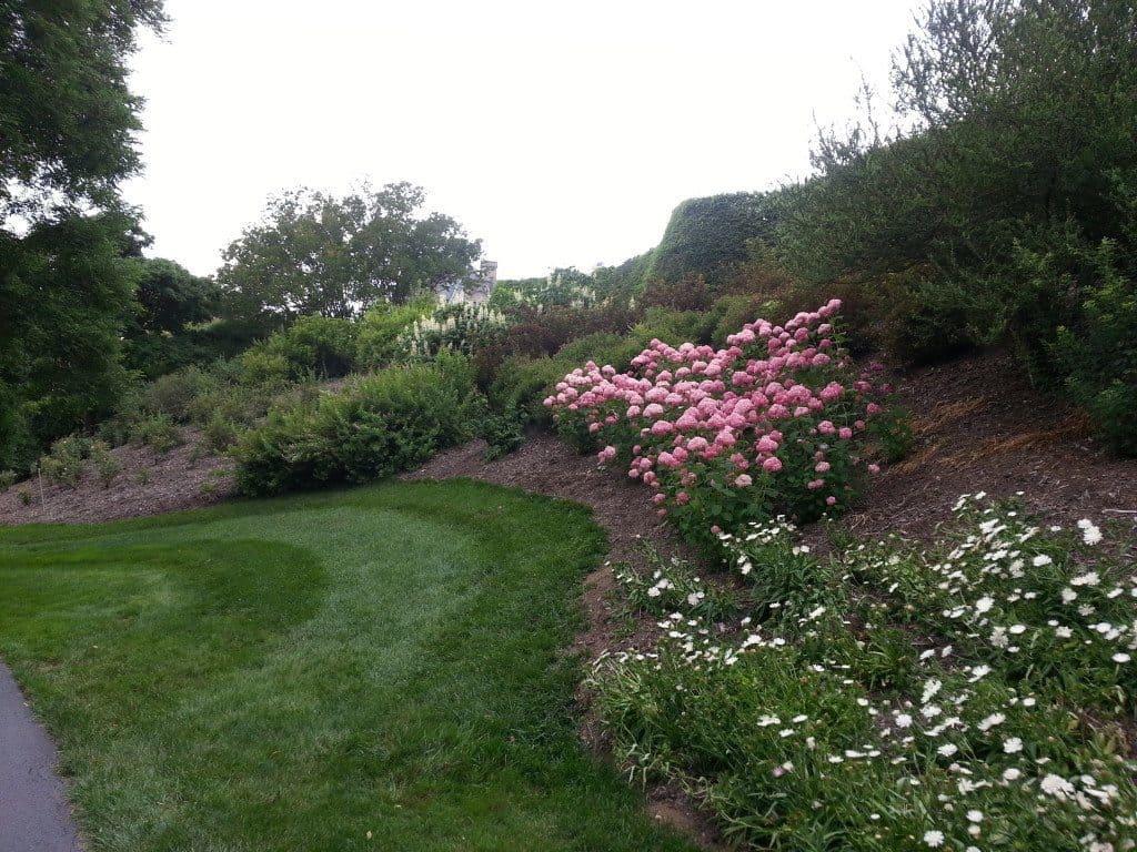 Flowers in bloom in the Biltmore Gardens