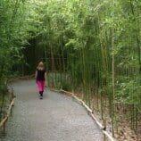 Cheekwood Bamboo walkway