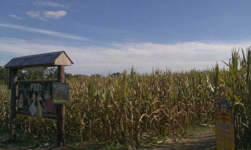 Honeysuckle Hill Farm corn maze