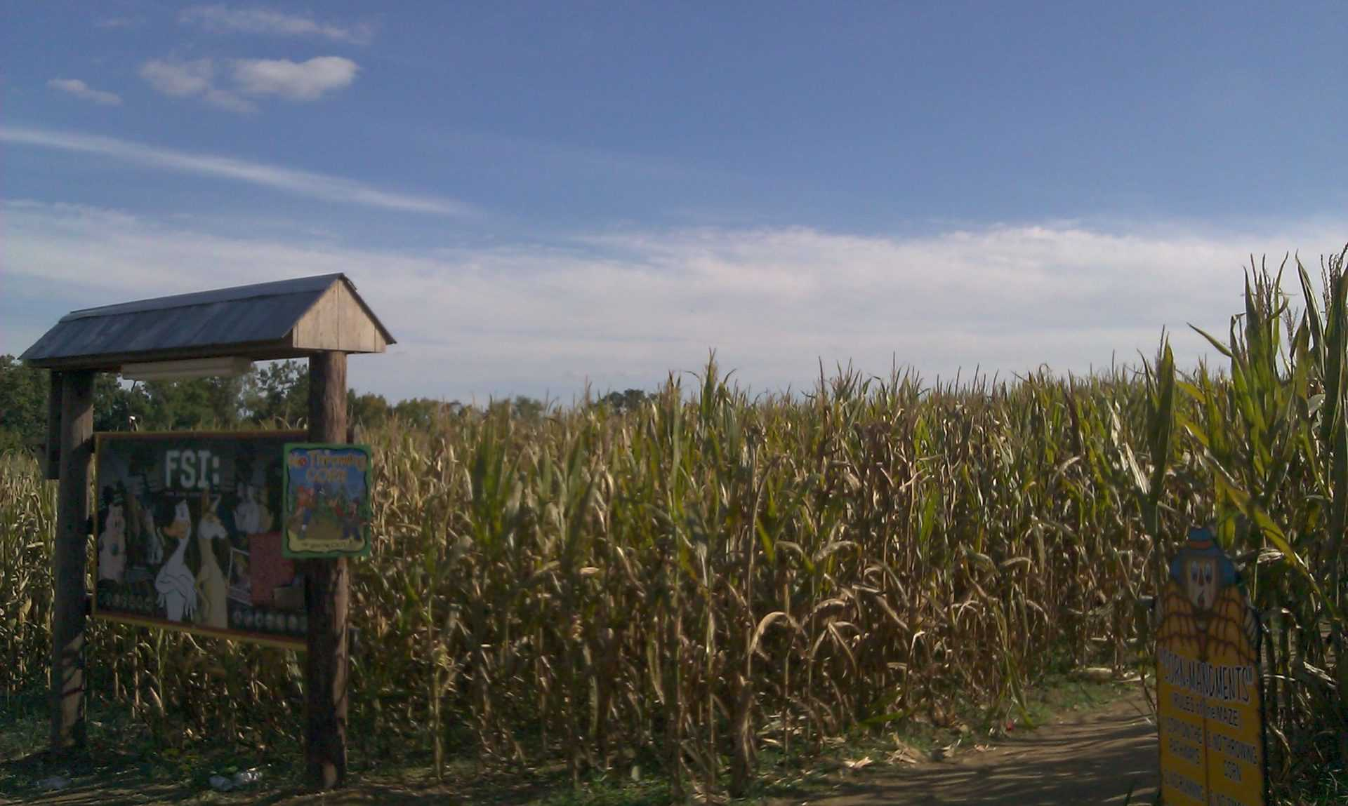 Honeysuckle Hill Farm corn maze