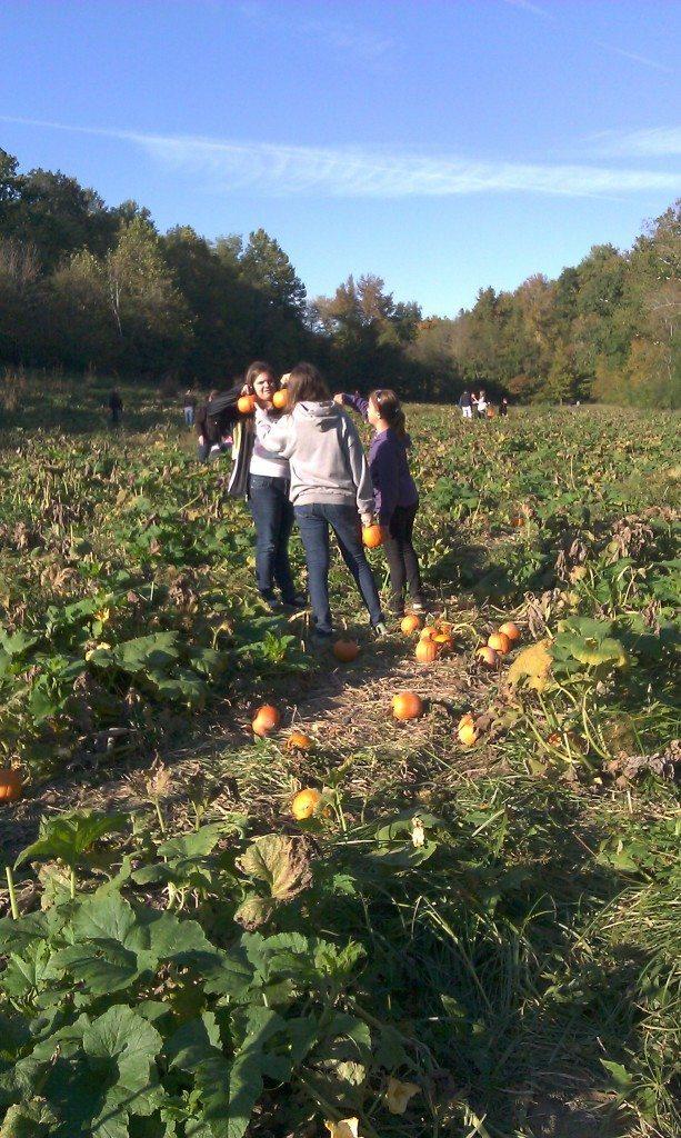 Honeysuckle Hill Farm pumpkin patch