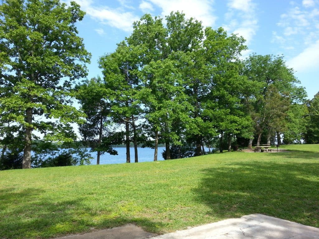 Cook Recreation Area tree and lake view