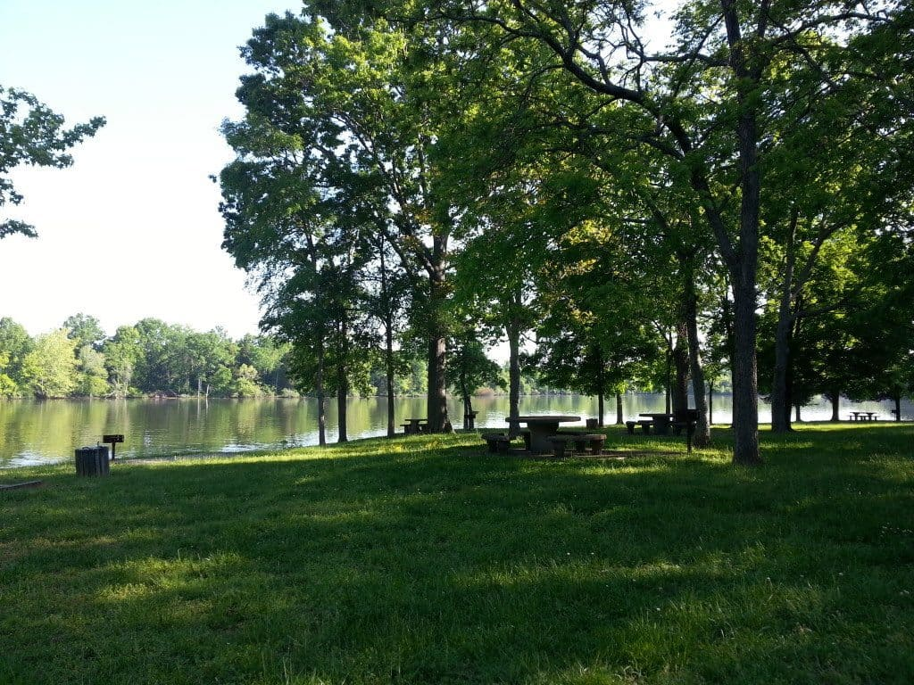 Lone Branch Recreation Area - view of the trees on the lake shore