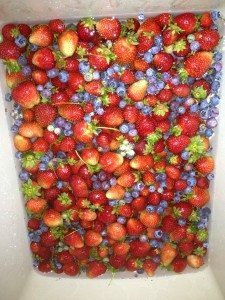 Circle S Berry Farm - Berries we picked