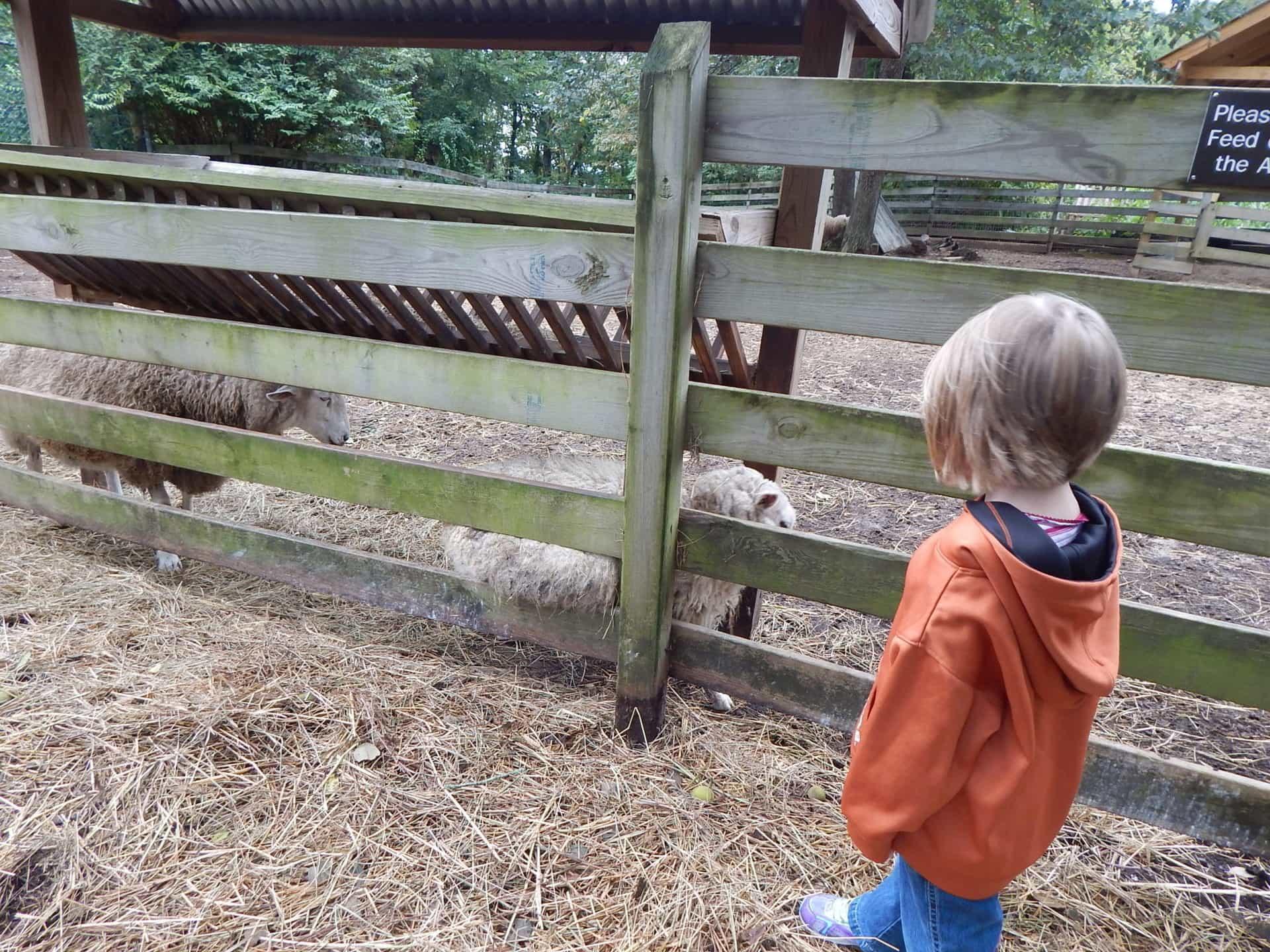 Burritt on the Mountain - Sheep