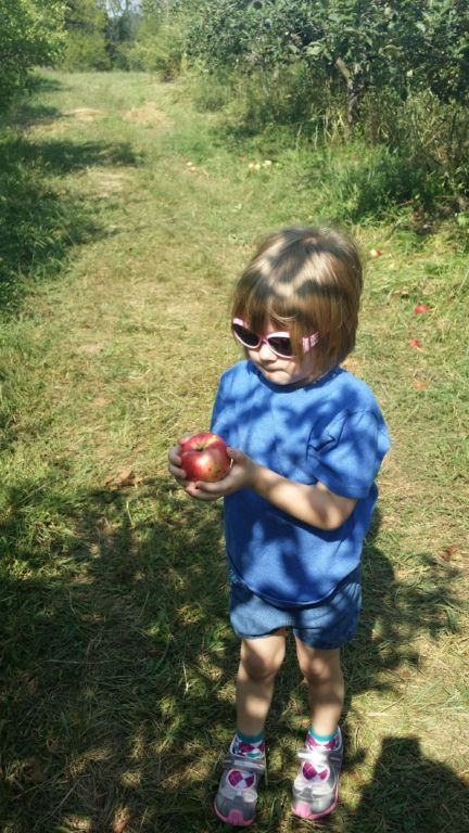 Pratt's Orchard - checking out the apples