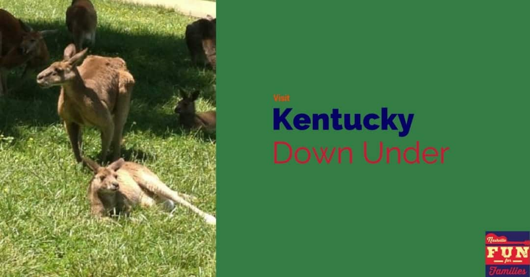 kentucky down under