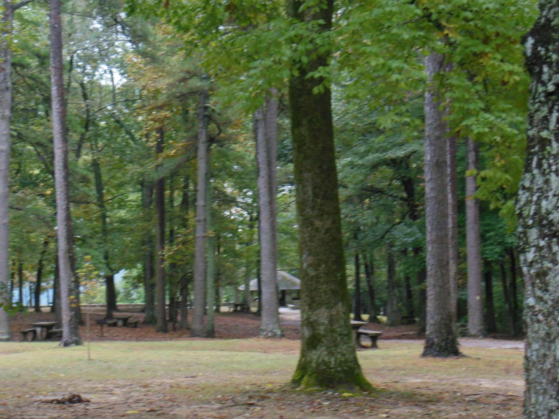 Monte Sano State Park - Trees