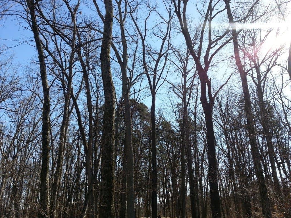 Stones River Battlefield mature trees