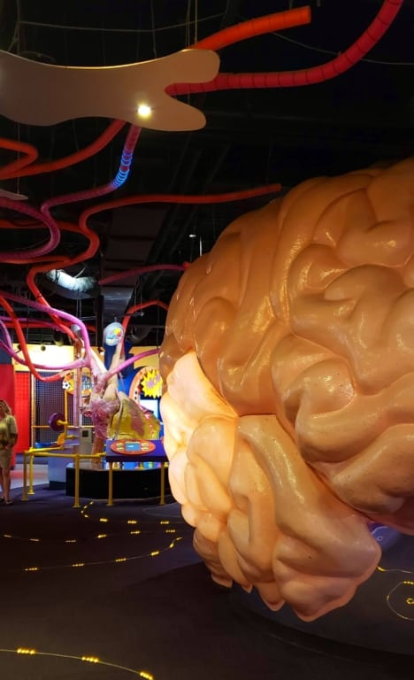 Adventure Science Center - Brain