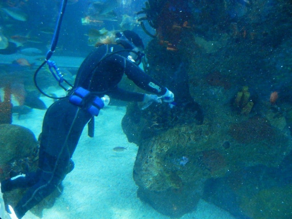 Aquarium Restaurant - diver in the main fish tank