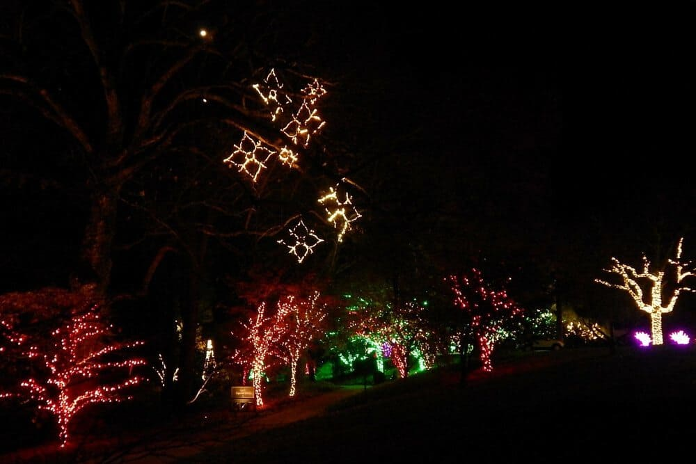 Holiday Lights at Cheekwood Botanical Garden - 2015 - walking paths