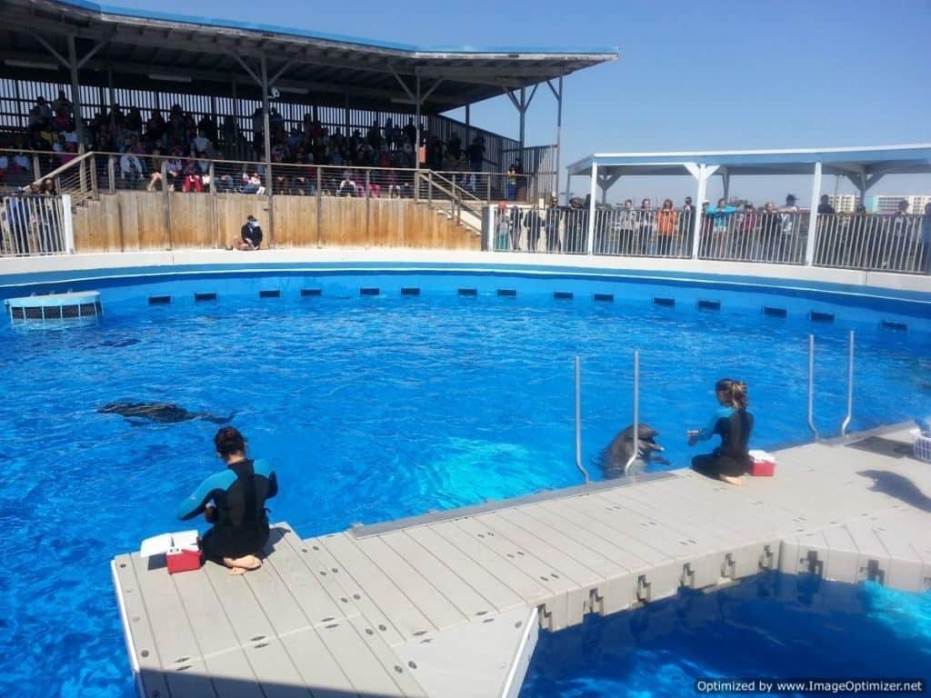Gulfarium Marine Adventure Park dolphin show