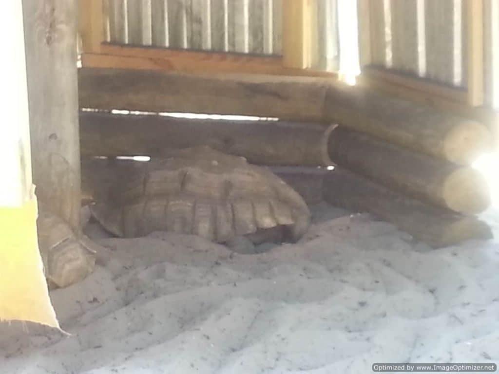 Gulfarium Marine Adventure Park tortoise