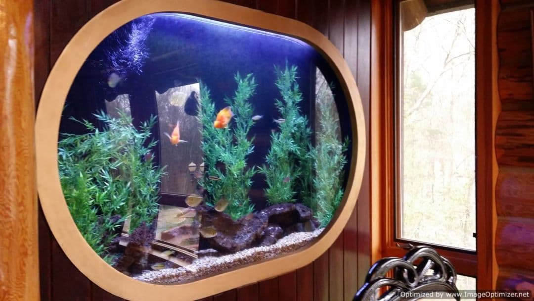 The Fontanel fish tank