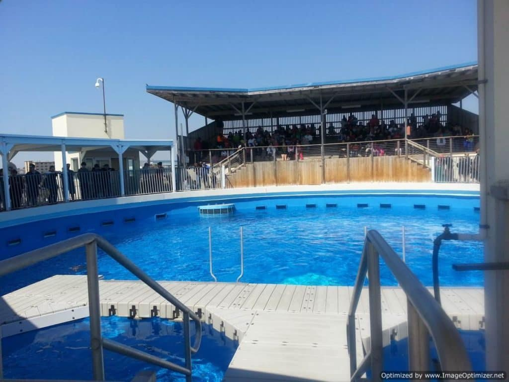 Gulfarium Marine Adventure Park show pool
