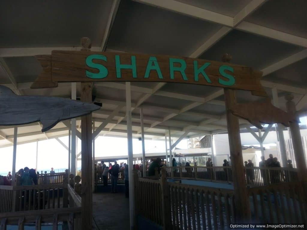 Gulfarium Marine Adventure Park sharks exhibit