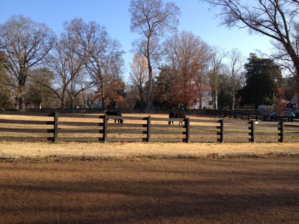 Belle Meade Plantation horses in a field