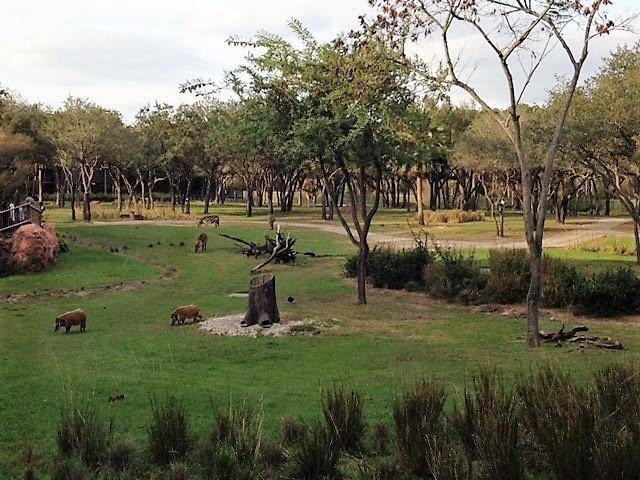 First Trip to Disney World - View from Animal Kingdom Lodge