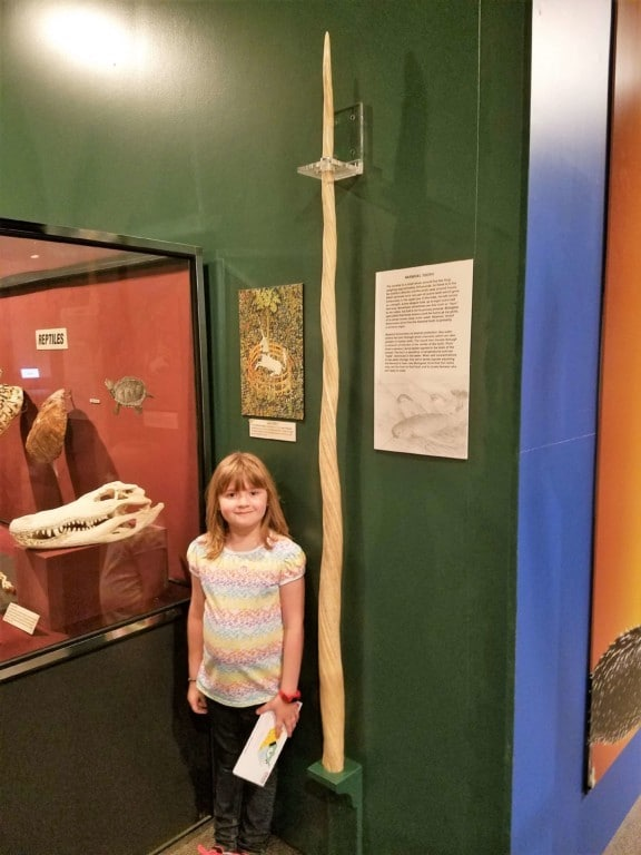 Pink Palace in Memphis, TN - Standing next to a narwhal tooth