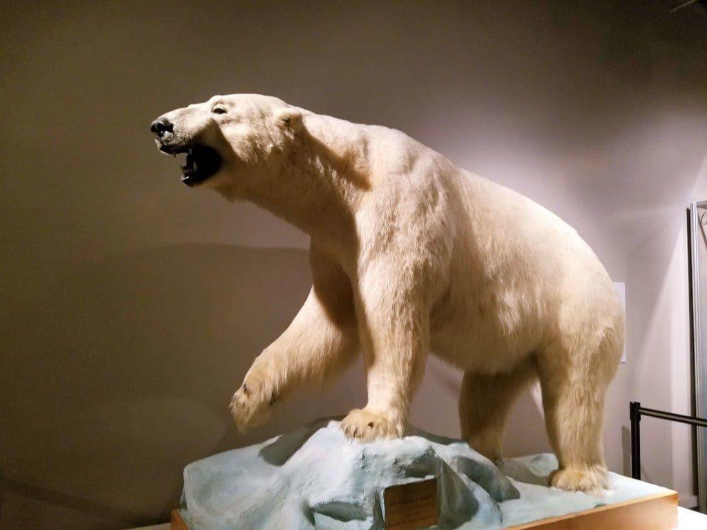 Pink Palace in Memphis, TN - polar bear