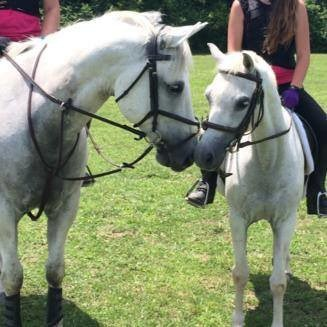 Creekside Riding Academy Camp - Sparkles a white horse being ridden by campers