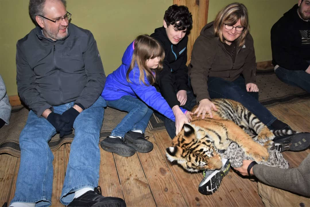 A large orange tiger cub playing with a toy on my son's foot at Myrtle Beach Safari