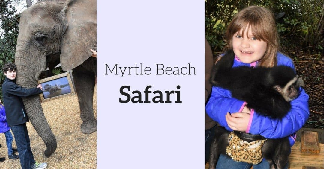 Myrtle Beach Safari – A Once in Lifetime Hands-On Wildlife Experience