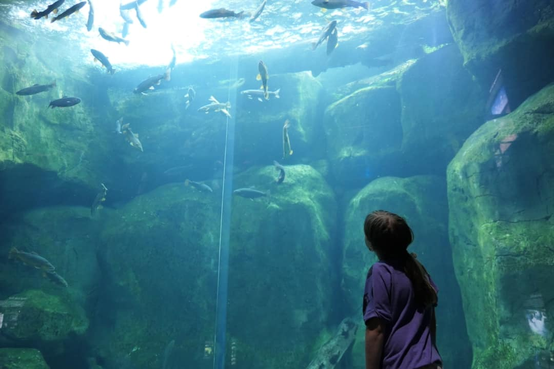 Tennessee Aquarium - viewing fish from below