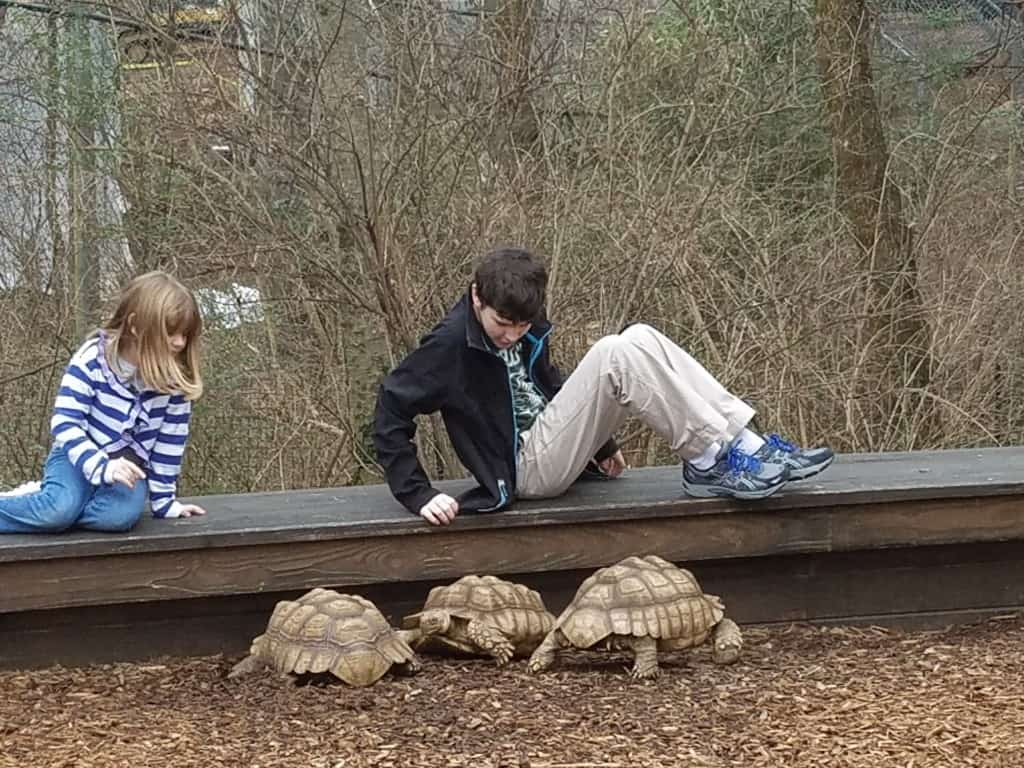 Visiting the tortoises at the Nashville Zoo