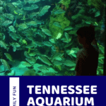 Tennessee Aquarium Pinterest Pin