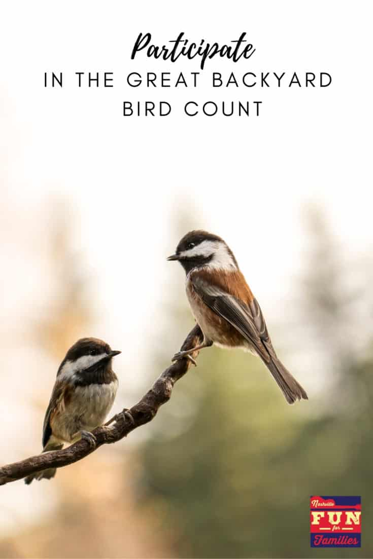 Participate in the Great Backyard Bird Count